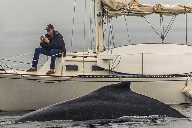 Az elmulasztott bálna