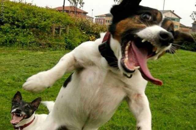 Őrult kutya, kutyatámadás