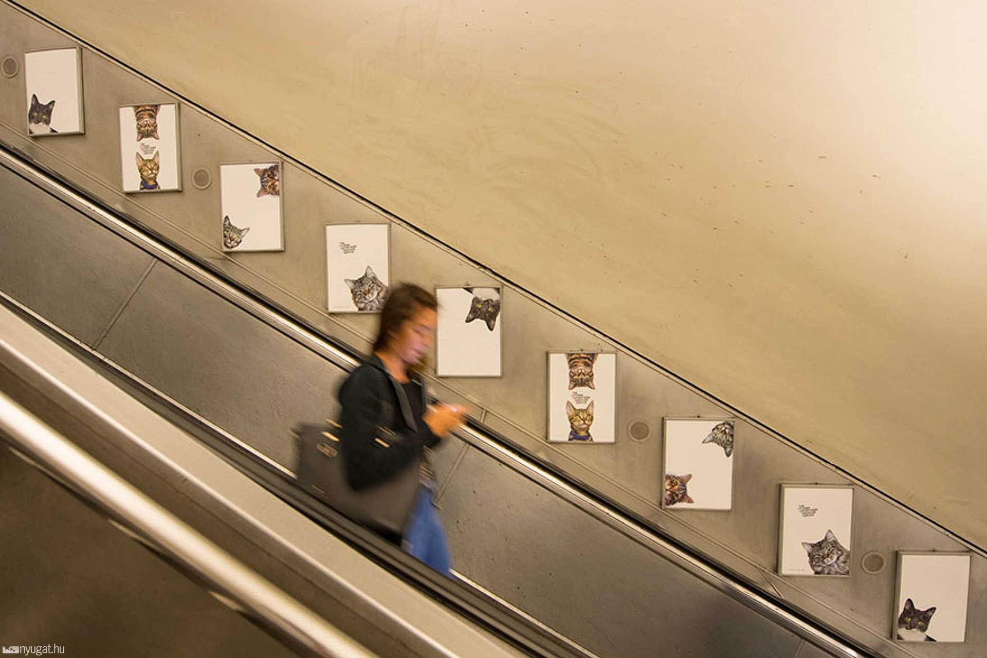 Macskás metró
