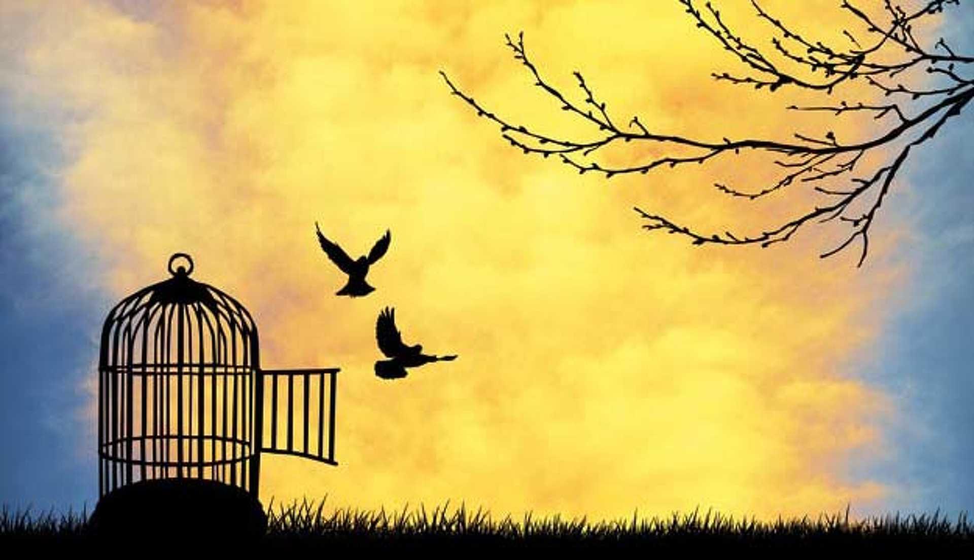 Amíg nem jutunk el a felvállalásig a világ olyan, mint a madárnak a kalitka. A szabadság érzése csak illúzió.
