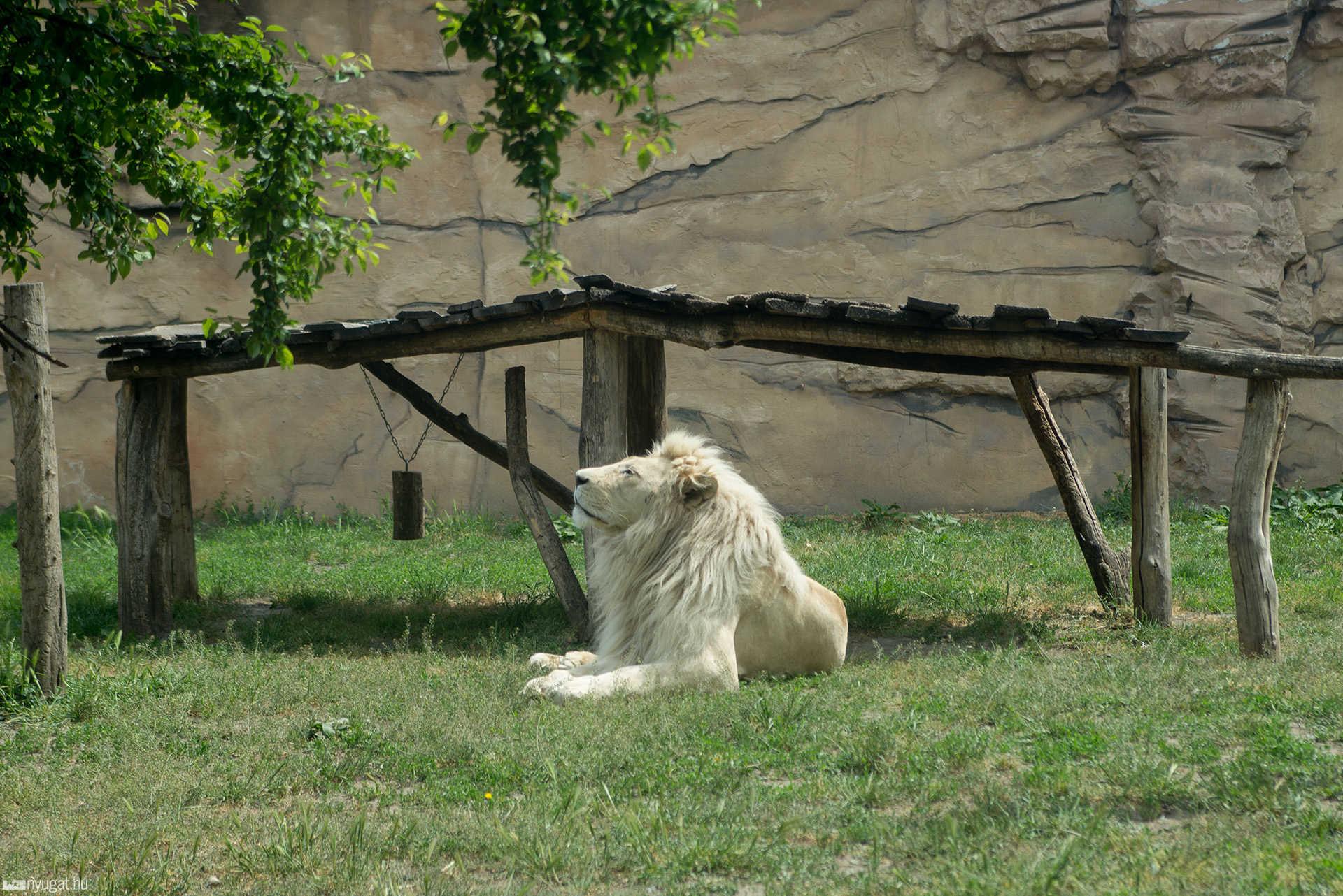 Győri állatkert