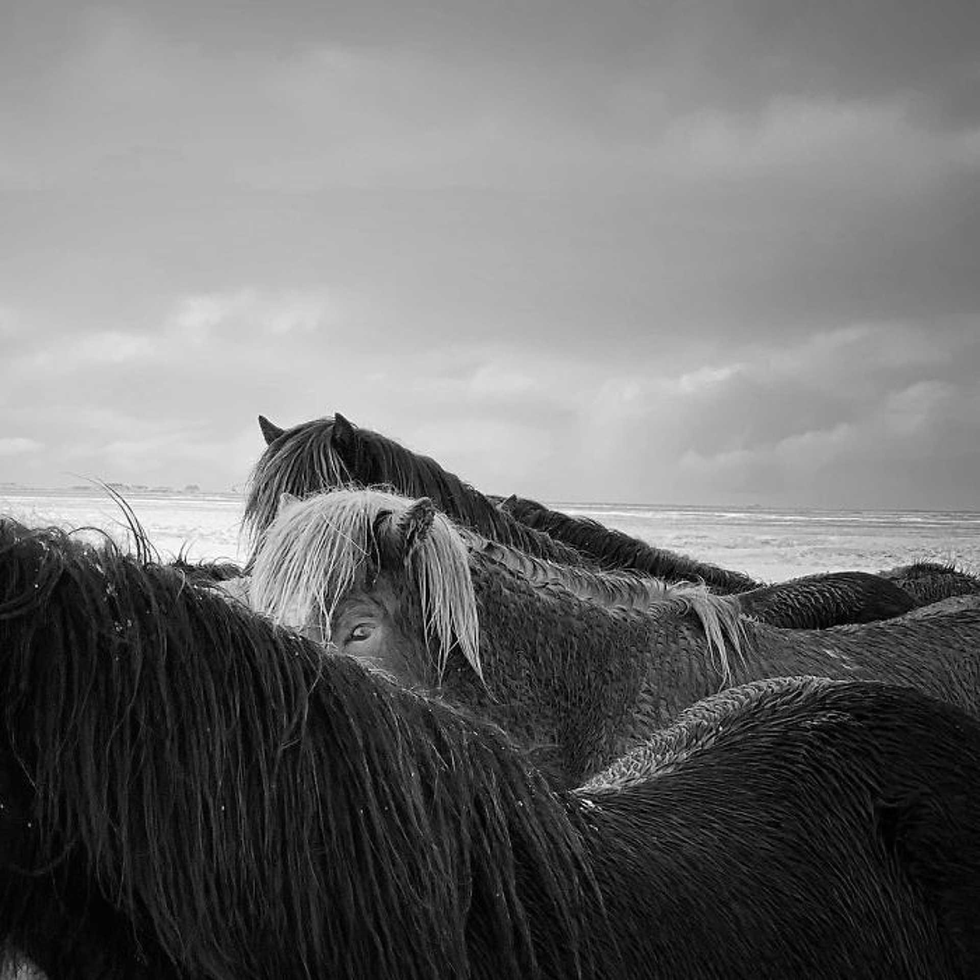 Állatok - Xiaojun Zhang: 'Horses In The Storm'