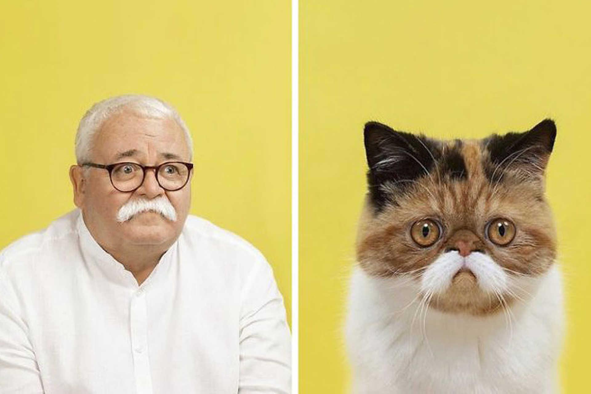 Te hasonlítasz a macskádra?