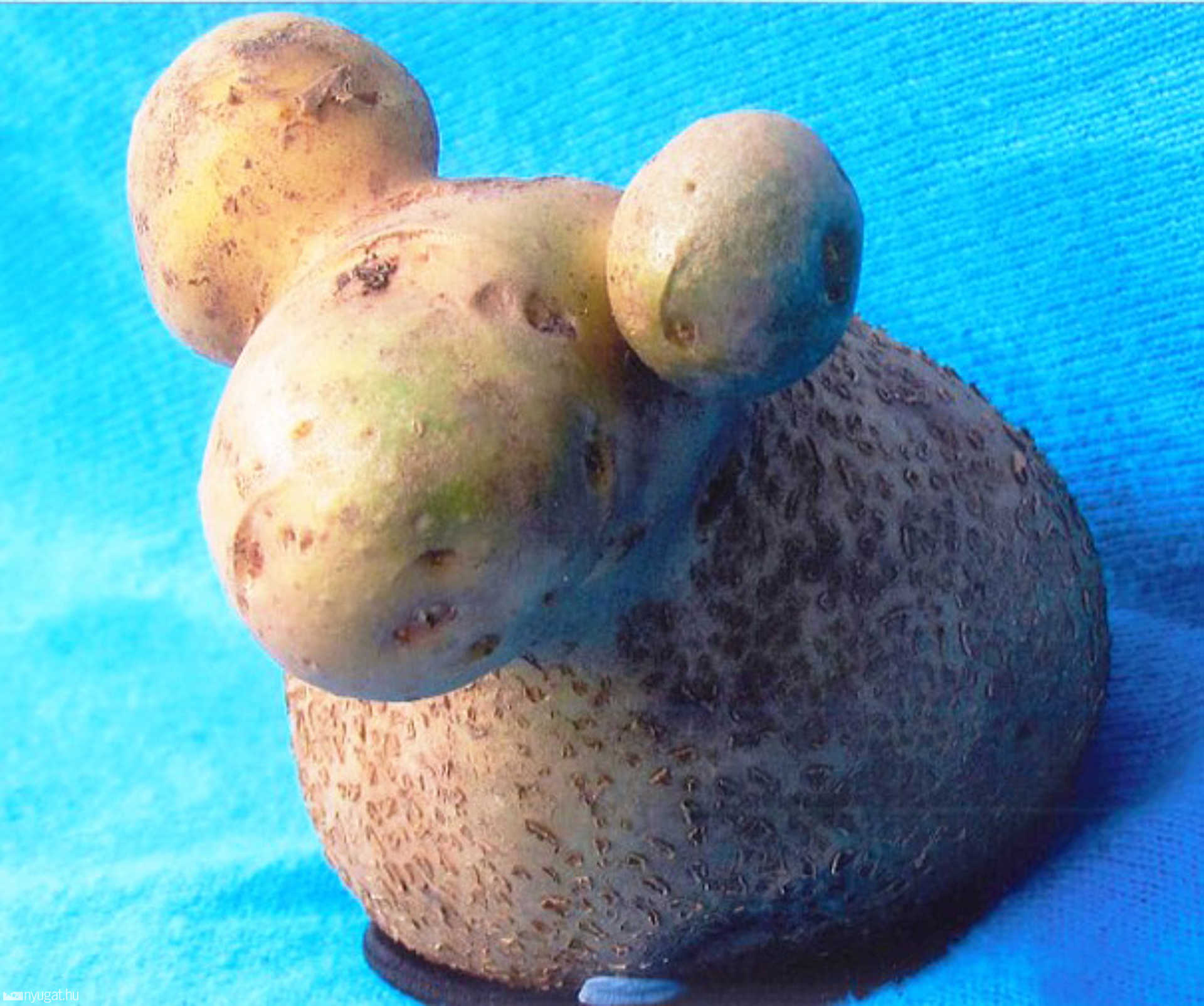 A krumpli kos